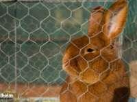 GALERIE FOTO: SIGHET - Expoziție cu vânzare de păsări și animale mici în prima și a treia sâmbătă din lună