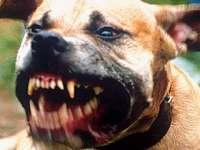 SIGHET: ÎNFIORĂTOR - Copil de patru ani, ucis de un câine în cartierul sighetean Iapa. Animalul l-a ucis pe loc şi l-a târât câţiva metri