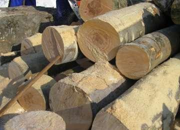 SIGHET - O societate comercială amendată pentru că deținea material lemnos fără acte de proveniență