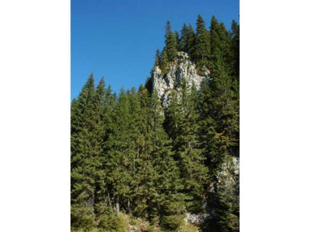 Turist elvetian cautat cu elicopterul in muntii Maramuresului
