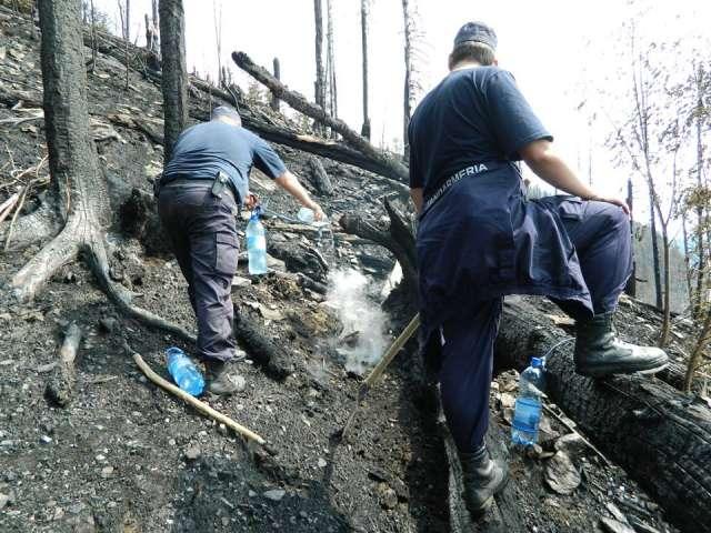 100 de jandarmi acţionează pentru stingerea incendiului din Borşa