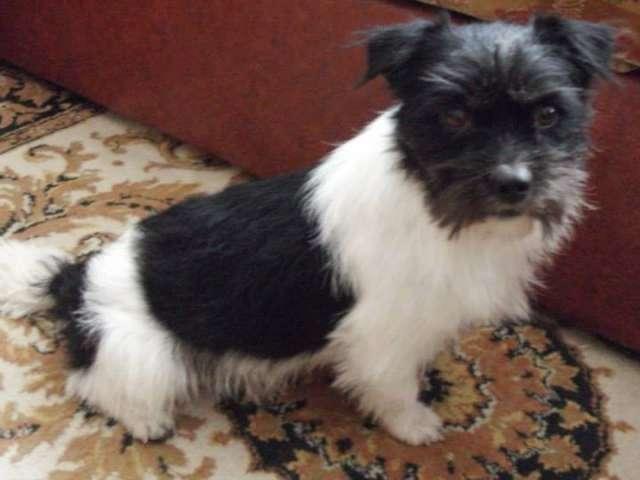 FOTO - Adoptă un câine, acordă-i o a doua șansă la viață