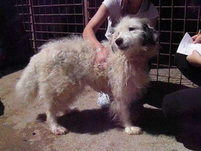 """GALERIE FOTO - Campania """"Adoptă un câine, salvează o viață"""", derulată de Asociația """"Prietenii animalelor"""", continuă"""