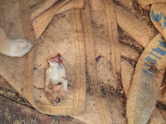 """FOTO + Reportaj VIDEO: Câinii fără stăpân, o sursă de îmbogățire pentru câțiva """"băieți deștepți"""". SURSE: foarte curând va începe eutanasierea câinilor din Adăpost"""