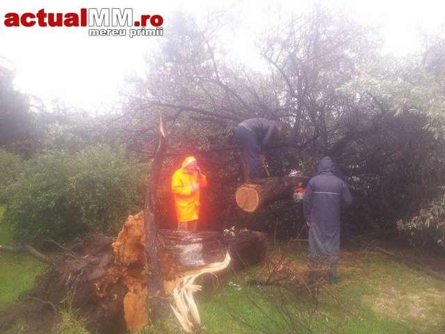 FOTO + VIDEO: Vișeu de Sus - O femeie a murit, fiind strivită de un copac doborât de furtună, iar o casă a fost lovită de fulger