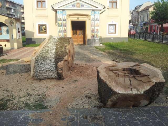 SIGHET - Copacii din fața Bisericii Ucrainiene au fost tăiați