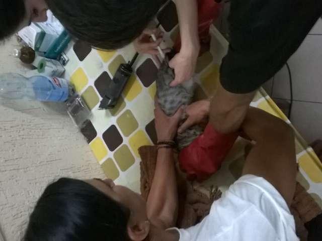 FOTO - SIGHET: Campania de sterilizare a câinilor și pisicilor, peste așteptări
