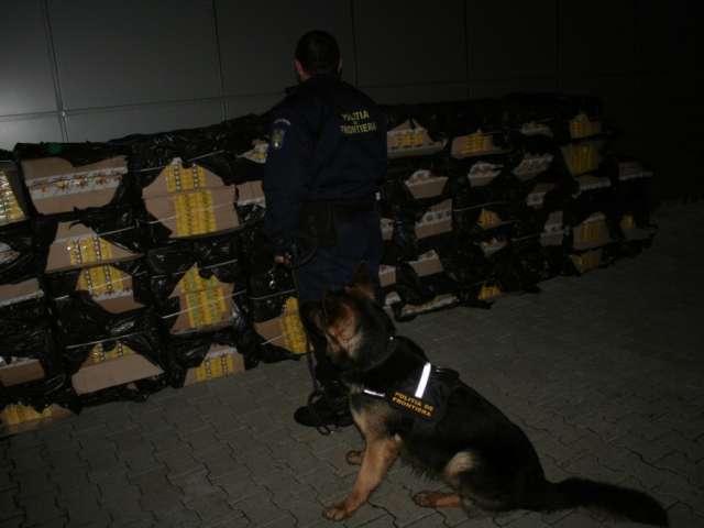 Captură de 23.000 pachete ţigări la frontiera de nord