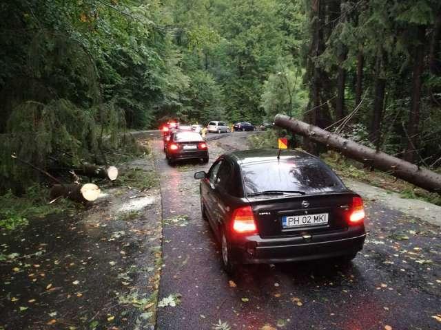 Traficul rutier pe DN 18 prin Pasul Gutâi, suspendat din cauza copacilor căzuți pe carosabil