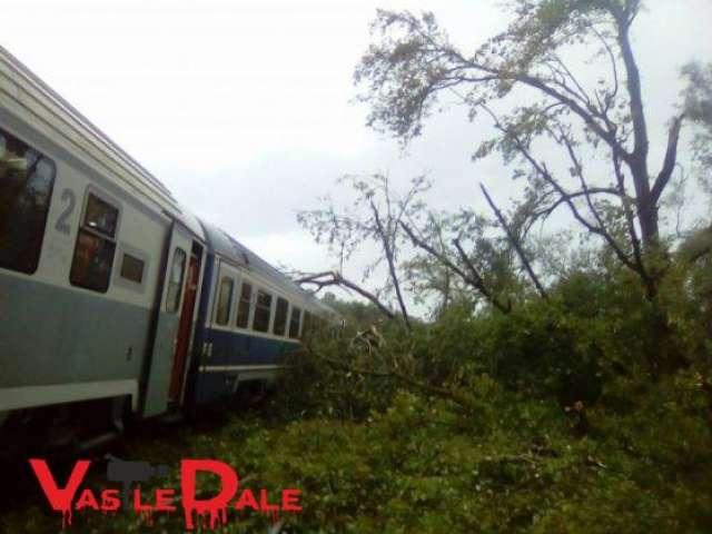 FOTO&VIDEO: Trenul București Nord - Baia Mare, blocat de zeci de copaci rupți de vânt