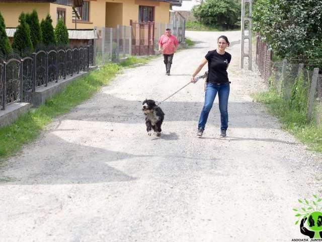 """SIGHET - Asociația """"Suntem Vocea Lor"""" a derulat o campanie de sterilizare a câinilor în cartierul Câmpu Negru"""