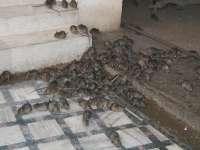 Sighetean mort de câteva zile, mâncat de şobolani în propria casă