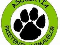 Sighetu Marmației - Campanie de sterilizare gratuită a câinilor cu și fără stăpân