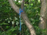 SINUCIDERE – Bătrân găsit spânzurat într-o pădure din Strâmtura
