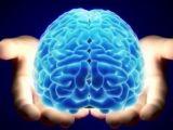 STUDIU: Palparea creierului fără a deschide craniul posibilă în curând