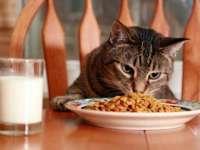 STUDIU: Pisicilor le place să muncească pentru hrană