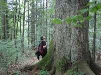 Tabără pentru protejarea pădurilor virgine din România organizată de Greenpeace