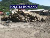 Tăierile ilegale de arbori, în vizorul poliţiştilor