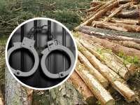 Tânăr din Vișeu de Sus, condamnat la un an închisoare pentru tăiere ilegală de arbori