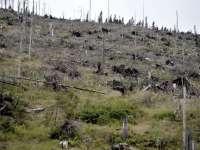 Teledetecţia: Noua metoda introdusă de Romsilva pentru depistarea taierilor ilegale de arbori
