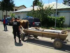 Țigări de contrabandă de 300.000 lei ascunse în care cu fân