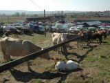 Toate târgurile de animale, închise pentru perioadă nedeterminată de timp