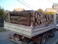 Transportatori de material lemnos sancţionaţi de poliţiştii maramureşeni