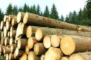 Trasport ilegal de lemne depistat de poliţişti
