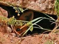 Trei copii au găsit o comoară dacică într-o vizuină de vulpe