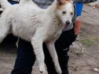 Uciderea sau maltratarea animalelor se pedepsește cu închisoarea