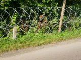 Ucrainenii ridică un gard din sârmă ghimpată la granița cu România. În zona Lunca la Tisa - Valea Vișeului lucrările sunt finalizate