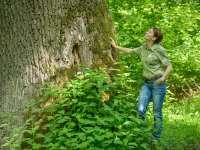 Ultima sansa pentru o padure cu arbori seculari din Maramures!