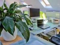 Un birou decorat cu plante îi face pe angajaţi mai fericiţi şi mai productivi