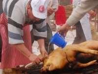 Un caz de trichineloză înregistrat în Maramureș, la un porc domestic