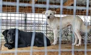 UN EXEMPLU PENTRU SIGHET - La Baia Mare Adapostul de câini al Primăriei, gestionat de două asociații