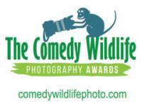Un hamster, declarat câștigător la un concurs de fotografii cu cele mai amuzante animale