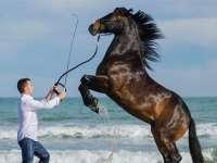 """Un sighetean este supranumit """"îmblânzitorul de cai"""" în Spania"""