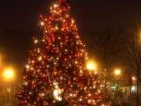 Unde va fi împodobit cel mai mare pom de Crăciun din ţară. Va avea 42 de metri înălţime