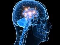 """Unele părți ale creierului """"adorm"""" chiar și atunci când suntem treji"""