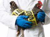 Uniunea Europeană interzice importurile de carne de pasăre din Ucraina din cauza gripei aviare