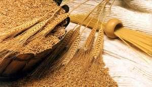 Uniunea Europeană se pregătește de o recoltă bună la grâu datorită producției record din Franța