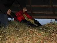 VADU IZEI: 1.000 pachete ţigări descoperite în două şoproane cu fân