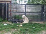 VIDEO: DOVADĂ DE LOIALITATE - Un câine stă de cinci ani în același loc, asteptându-și stăpânul care a murit