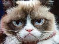 VIDEO: Grumpy Cat, devenită celebră pe internet, i-a adus proprietarei aproape 100 milioane de dolari