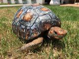 VIDEO: O broască țestoasă a fost salvată și trăiește datorită unei carapace realizate cu o imprimantă 3D