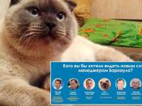 VIDEO: O pisică se află în fruntea sondajelor pentru alegerile dintr-un oraș din Siberia