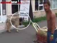 VIDEO: STĂPÂNUL ȘI CÂINELE – Un patruped îi cară casetofonul stăpânului pe străzile din Baia Mare