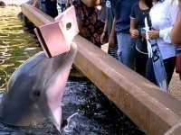 VIDEO: Un delfin curajos a luat iPad-ul unei femei care voia să-l fotografieze