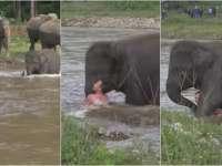 VIDEO: Un elefant a salvat un om de la înec