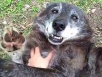 VIDEO - Un lup foarte fericit, clipul ce a devenit viral pe internet în doar două zile